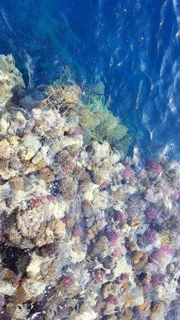 The Palace Port Ghalib: Aus dem Steg zum Schnorcheln, wunderbar klares Wasser