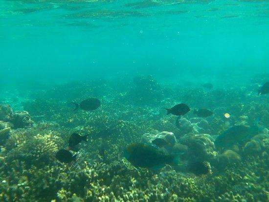 Fihalhohi Island Resort : Hausriff