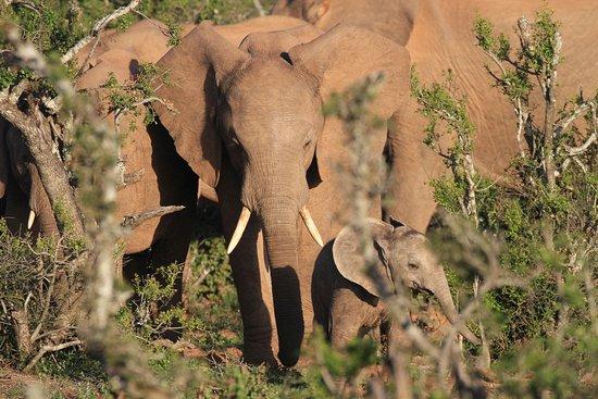 Addo Elephant National Park 이미지
