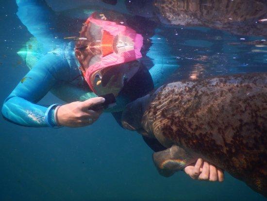 Bird's Underwater: Kisses
