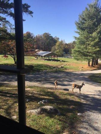 Wytheville, VA: Wildlife