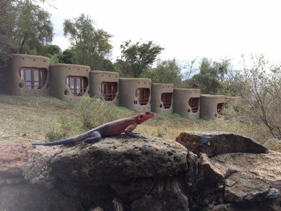 Mara Serena Safari Lodge Picture