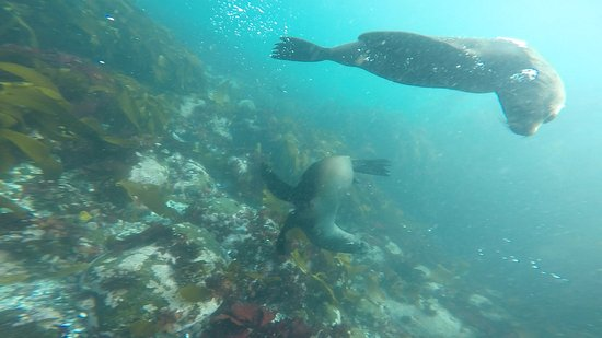 Hout Bay, South Africa: photo1.jpg