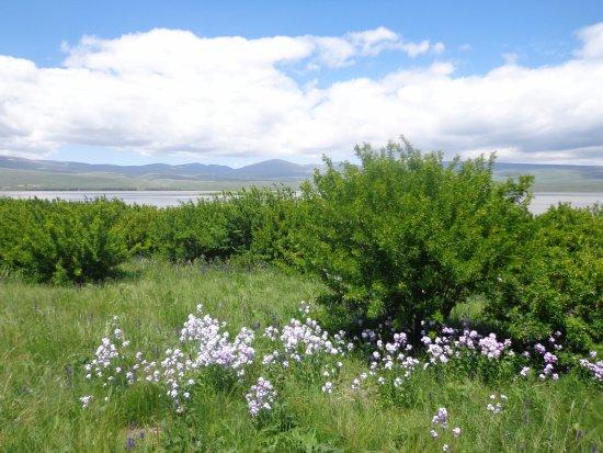 Shirak Province, Armenia: Озеро Арпи