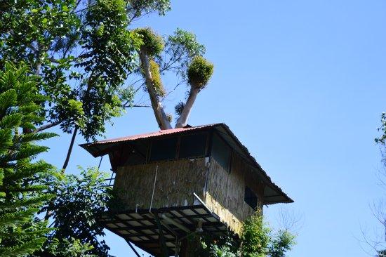 Tree Hut Room Picture Of Wild Elephant Eco Friendly