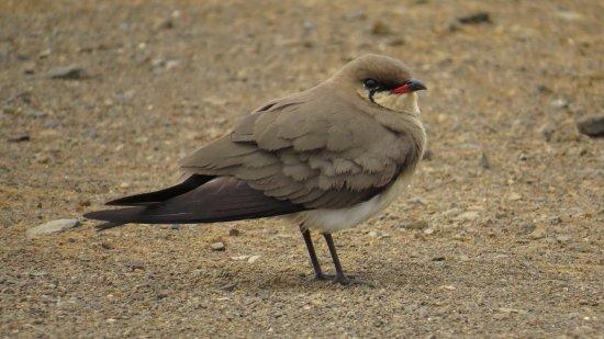 St Lucia, Sudáfrica: Tijdens onze birdwalk met Themba gemaakt