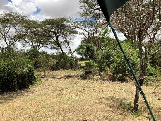Porini Mara Camp: View from tent 6