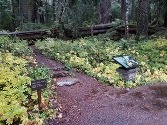 Ashford, WA: Entrance Twins Loop Trail