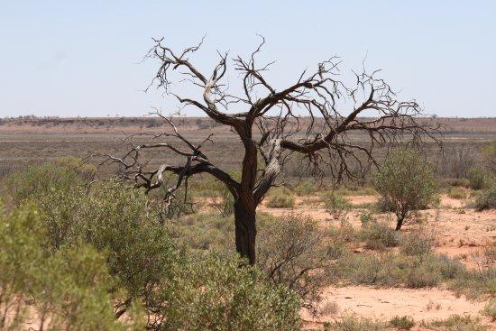 Thargomindah, ออสเตรเลีย: Imposant