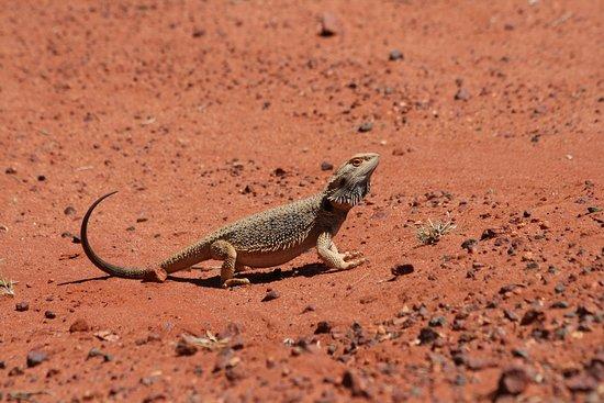 Thargomindah, ออสเตรเลีย: Einer von Vielen