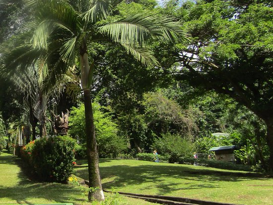 Kingstown, St. Vincent: Lots of trees