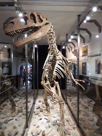 Combe Martin Wildlife and Dinosaur Park : Museum