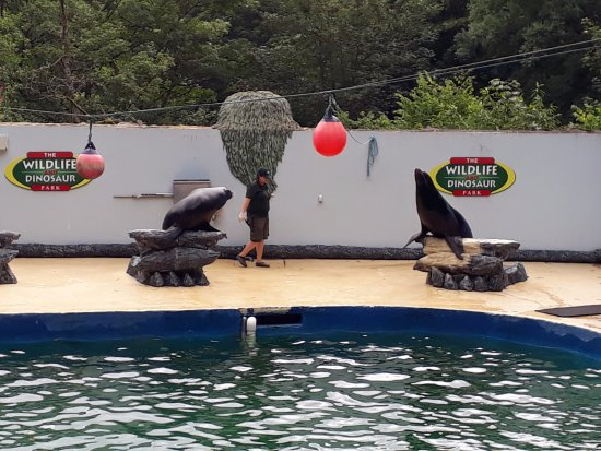 Combe Martin Wildlife and Dinosaur Park : Sea Lion Show