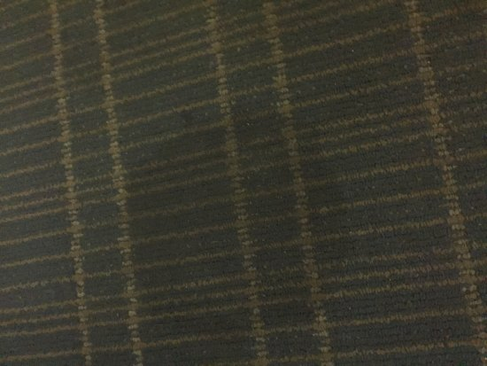 Days Inn & Suites Amelia Island at the Beach: Stains on carpet.