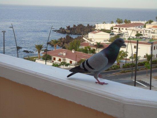 Hotel Bahia Flamingo: Vue depuis la terrasse