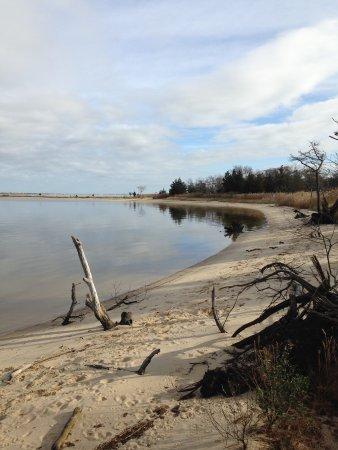 Cattus Island County Park: Beach