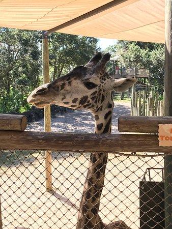 Brevard Zoo: photo0.jpg