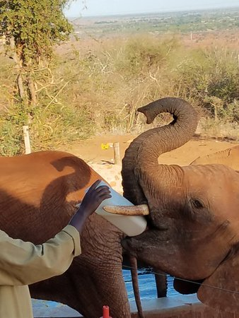 David Sheldrick Wildlife Trust: 20171030_170433_large.jpg