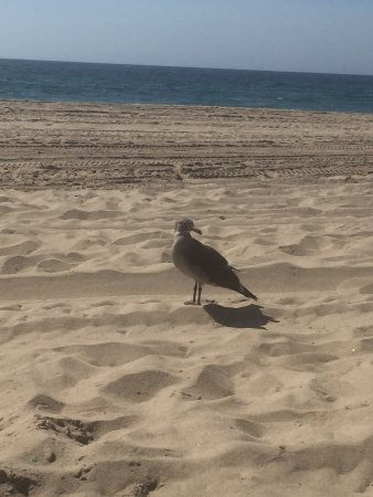 Hermosa Beach, Californien: Patiently waiting for leftovers