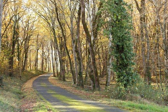 """Saint-Aubin-de-Nabirat, فرنسا: Une merveilleuse petite route """"Le passage"""""""