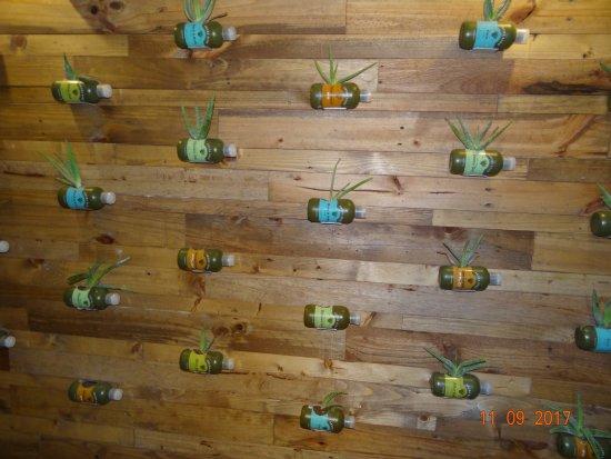 Aruba Aloe Balm: Wall display of plants