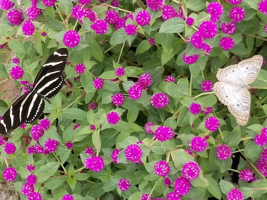 Desert Botanical Garden: Butterfly House