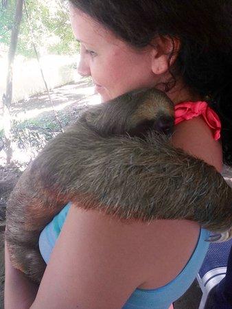Coxen Hole, Honduras: Cuddling a baby sloth!