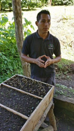 Санта-Елена, Коста-Рика: Sergio and coffee sprouts