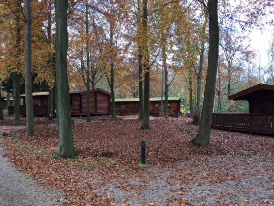 Лаут, UK: Beautiful lodges in the woods