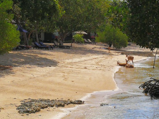 West Bali National Park, Indonesia: Locals hanging out as seen from Pantai Restaurant