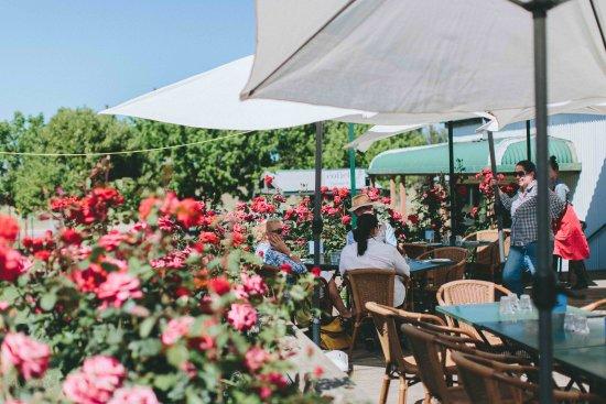 Wahgunyah, Australia: DEck and Roses