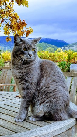 O'Brien Estate Winery: WInery cat