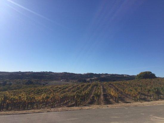 Ecluse Wines: photo7.jpg