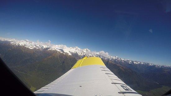 Fox Glacier, New Zealand: FLORA 0021_large.jpg