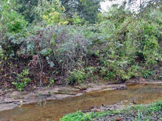 Nacogdoches, เท็กซัส: the creek