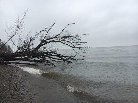 Wilson, NY: Shoreline