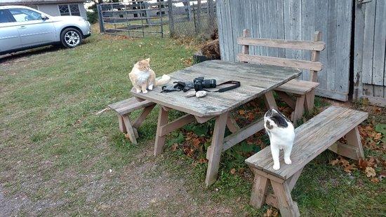 Winchester, VA: IMG_20171119_152807513_large.jpg