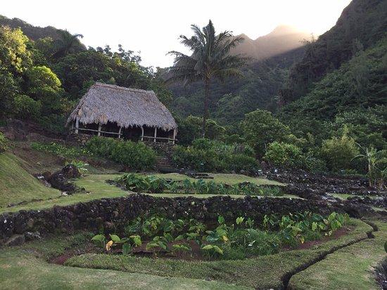 Hanalei, HI: Ancient taro terraces
