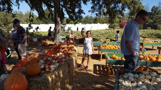 Fallbrook, Californië: Pumpkins, Pumpkins and more Pumpkins