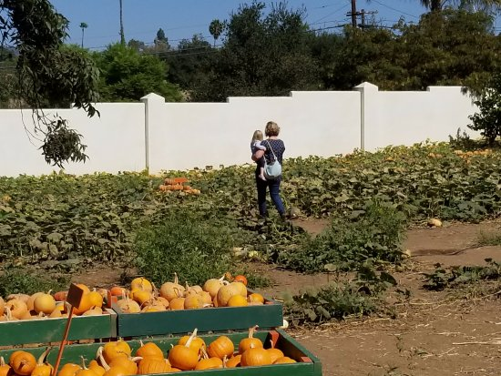 Fallbrook, Californië: Strolling the Pumpkin Patch