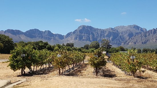 Nederburg Wines: 20170328_120653_large.jpg