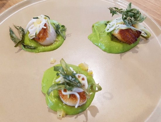Mr Morce: Pan seared scallops - zucchini puree, preserved lemon, saltbush