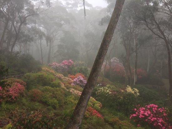 Blackheath, Australia: photo7.jpg