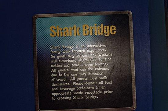 Adventure Aquarium: Walk the Shark Bridge