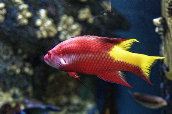 Camden, NJ: Tropical Fish 1