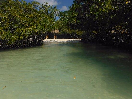 Savaneta, อารูบา: manglar