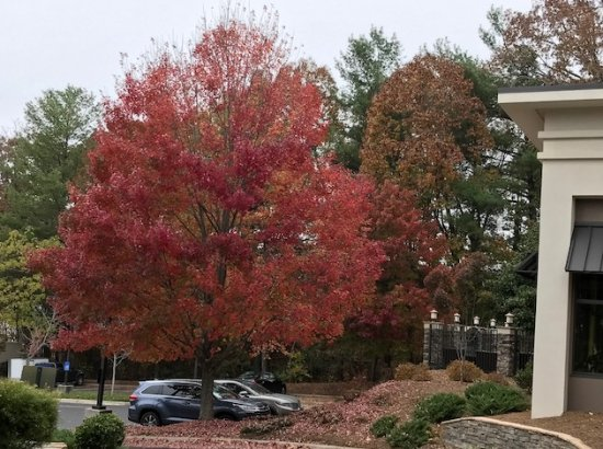 fall foliage still in view from hampton inn in asheville picture