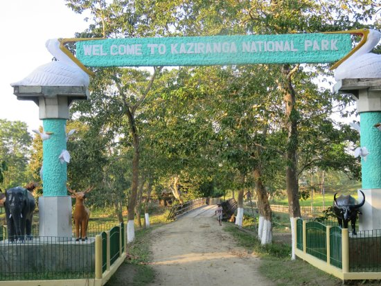 Nature Hunt Eco Camp, Kaziranga National Park: 20140101101129_large.jpg