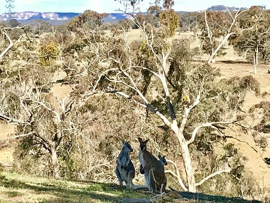 Capertee, Australia: IMG-20171109-WA0005_large.jpg