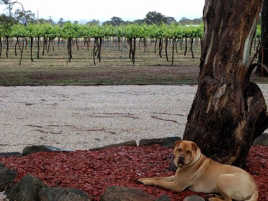 Mudgee, Australië: Plus a furry companion